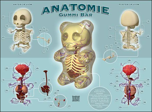 anatomia-oso-gominola.jpg