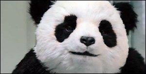 Nunca digas NO a panda
