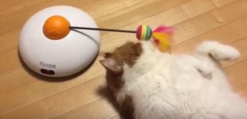 el gato mas vago del mundo